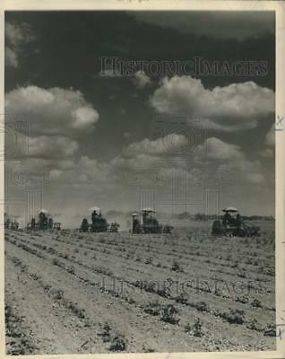 1954 Press Photo Mechanical cultivators in Mississippi Cotton Field - nob53396