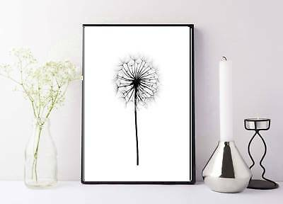 dandelion taraxacum flower up close photography black and white print/poster