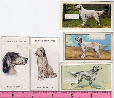 English Setter Dog 5 Different Vintage Ad Trade Cards 2nd