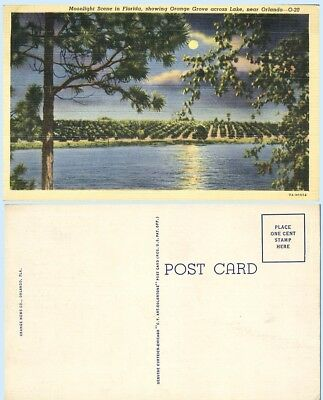 Orange Grove in Moonlight Orlando Florida 1937  Postcard