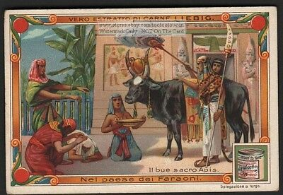 Worship Sacred Cow Bull Of Apis Ancient Egypt 1903  Trade Ad Card