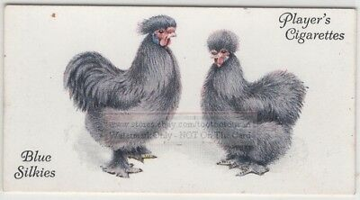 Blue Silkies Fancy Chicken Poulty Hen Rooster 85+ Y/O Trade Ad Card