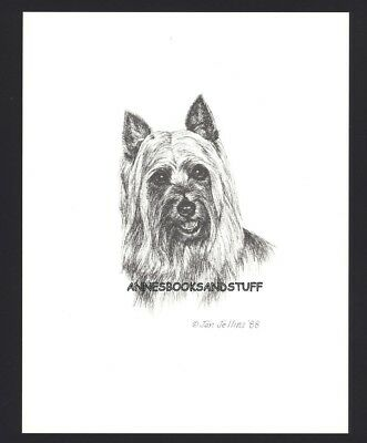 #410 AUSTRALIAN SILKY TERRIER* dog art print * Pen and ink drawing * Jan Jellins
