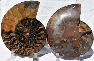 "Cut Split PAIR Ammonite Deep Crystal Cavity 110myo Fossil 205mm XXXL 8.1"" 2270xv"