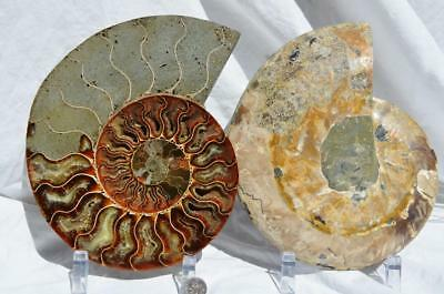 "Cut Split PAIR Ammonite Deep Crystal Cavity 110myo Fossil 205mm XXXL 8.1"" 8627xv"