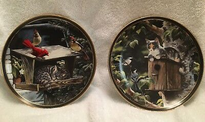 """Cat Nap"" & ""House Sitting"" Nosy Neighbors Decorative Plates by Persis Weirs"