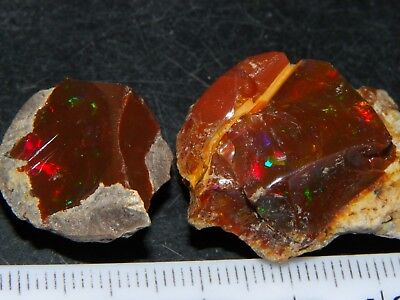 2 Nice Quality Rough Shewa Ridge Chocolate Opals 73.5cts Multicolour Fires NR
