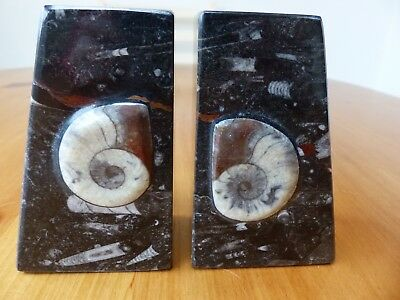 Heavy Black Marble ammonite goniatite Fossil Book ends