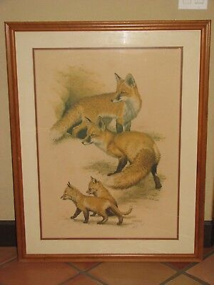 Vintage Guy Coheleach Fox Den Limited Edition Framed Print, Signed, Red Fox