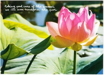 The Present Moment Thich Nhat Hanh Buddhism Quote Postcard #4