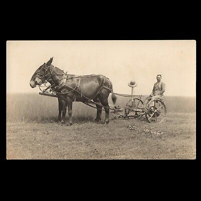 c1909 Real Photo Postcard RPPC of COFFEYBURG MO Horses & Farmer on DEERE? PLOW