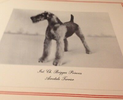 Vintage Large Print of Airedale Terrier Champion - 1937