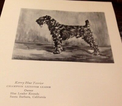 Vintage Book Page - 1927 - Kerry Blue Terrier + Irish Wolfhound Champion Dogs