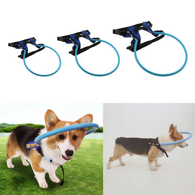 Durable & Wear Resistant Blind Dogs Walk Prevent Collision Ring Equipment