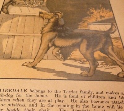 Vintage Book Page with an Airedale Terrier - 1930's