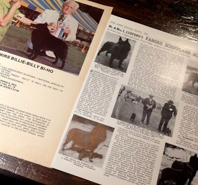 Vintage Magazine Pages with a Schipperke