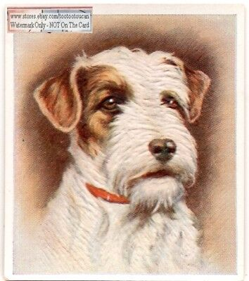 Sealyham Terrier  Dog Pet Animal Canine c80 Y/O Trade Ad Card