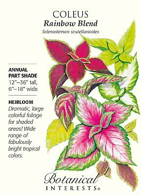 Rainbow Blend Coleus Seeds - 200 mg - Annual