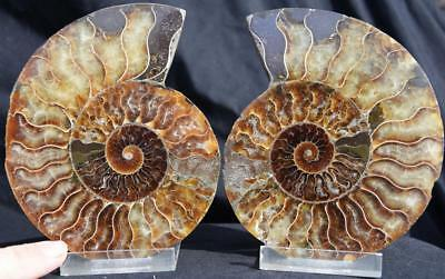 6155 Cut Split PAIR Ammonite Deep Crystal Cavity 110myo Fossil 134mm XLARGE 5.3""