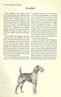 """The Airedale Terrier - Vintage Dog Art Print - Matted """"G"""""""