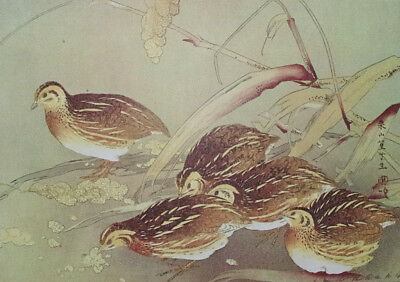 QUAIL, BIRDS : by RAKUSAN - Old Art Print of a Japanese Woodblock / Woodcut