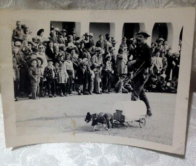 Vintage Dog Photo - Boston Terriers Pulling a Wagon