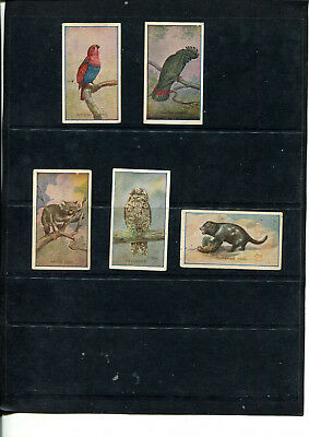 Cigarette Cards Sniders & Abrahams Advertising Gifts      5 Cards  Lot 415