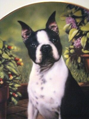 "DANBURY MINT BOSTON TERRIER PLATE ""ALL EARS"" By Dan Hatala"