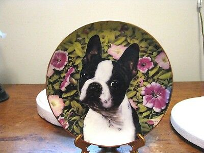 "DANBURY MINT BOSTON TERRIER PLATE ""PETUNIA PUP"" By Dan Hatala"