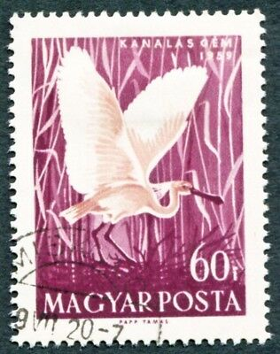 HUNGARY 1959 60fi SG1578 used NG Water Birds White Spoonbill #W31