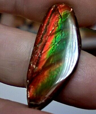 ammonite ammolite STONE 31.5x14mm