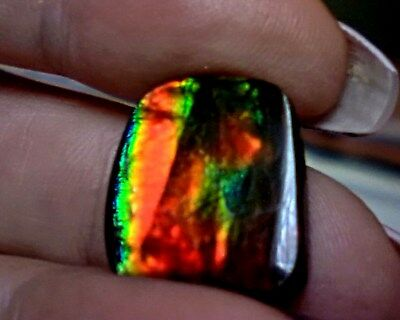 ammonite ammolite STONE 17.5x16.2mm