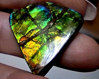ammonite ammolite STONE 31.7x31.3mm