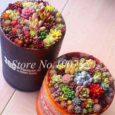 500pcs Mixed Succulent Seeds Lithops Rare Living Stones Plants Cactus Home Plant
