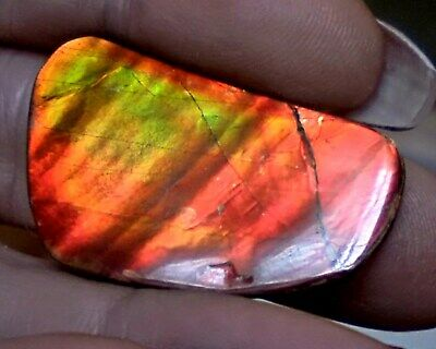 ammonite ammolite STONE BRIGHT 35.9x22mm