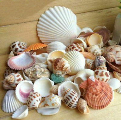 Natural Sea Shells Beach Wedding Display Craft Aquarium Decor Nautical Mixed