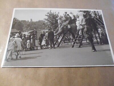 Old Photograph, Elephant Riding, Ladders, London Zoo 1920's? Keepers, Cloche Hat