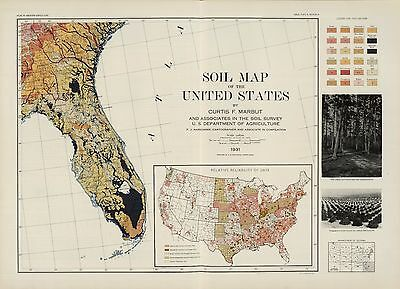 1931 UNITED STATES AMERICA historic Soil Map FLORIDA POSTER 5797105