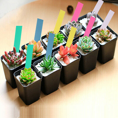 50x Garden Plant Pot Markers Plastic Stake Tags Yard Court Nursery Seed Label US