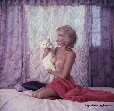 Bunny Yeager Estate 1960s Sex Kitten Color Transparency Sandra Sinclair Mod Pose