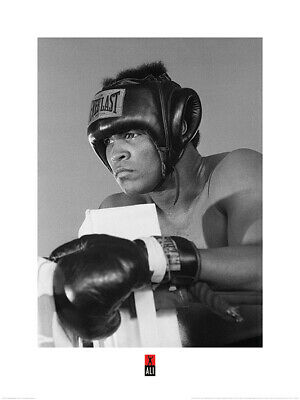 Muhammad Ali Training Art Print 24 x 31.5 Inches Officially Licensed