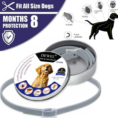 Bayer DEWEL Flea Tick Collar for Large Dogs above 8kg 18LBS 8 Month Protection