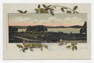 1907 WHITEFIELD NEW HAMPSHIRE FOREST LAKE Lovely Unique Post Card #3041