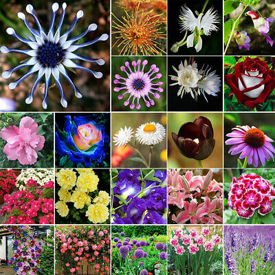 1-10000PCS Mix Beautiful Garden Flower Bulbs Spring Summer Perennial Plant Seeds