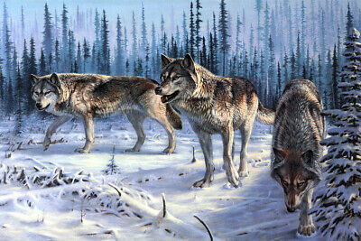Wolfs ready to attack oil painting picture decor art printed on canvas L2430