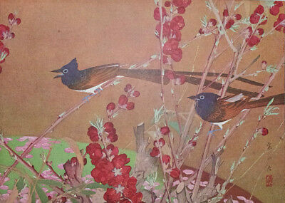 PARADISE FLYCATCHER BIRD : by RAKUSAN - Old Art Print of a Japanese Woodblock