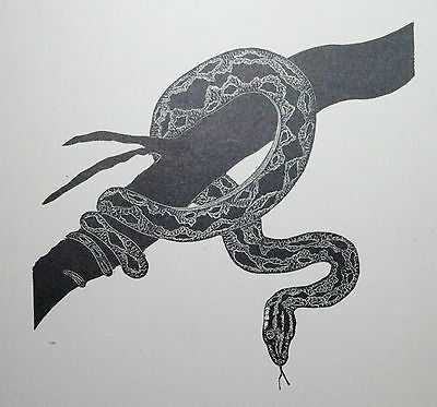 THE PYTHON SNAKE: Art Deco Reptile, Reptiles Print of a 1920s Woodcut By DAGLISH