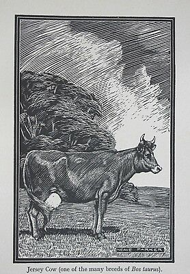 JERSEY COW : Superb Original Art Deco 1941 Print of a Woodcut by NEAVE PARKER