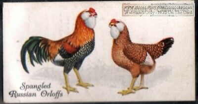 Spangled Russian Orloff Fancy Chicken Poulty Hen Rooster 85+ Y/O Trade Ad Card