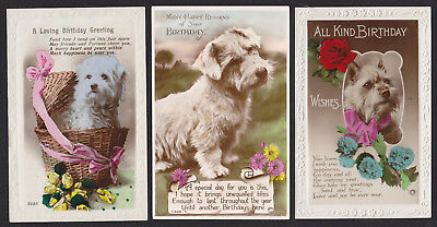3-Dogs-Real Photo-Birthday-White Terrier-Tinted-c1920's-30's Postcard Lot
